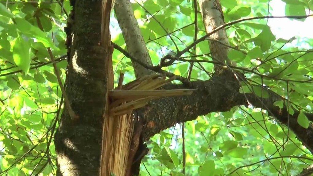 Во время урагана пожилую тамбовчанку убила упавшая ветка