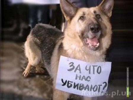 Защитники животных советуют тамбовчанам держать питомцев дома