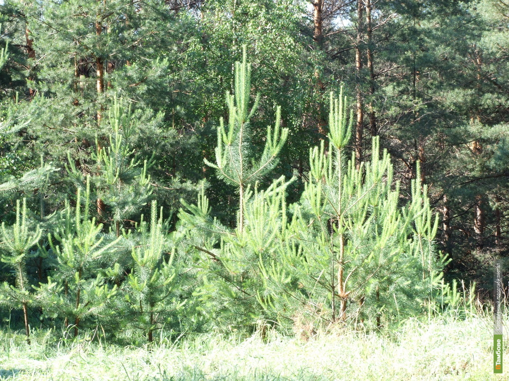 Последствия лесных пожаров на Тамбовщине ликвидируют к 2013 году