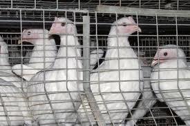 Зерновая компания купила тамбовскую «Арженку»