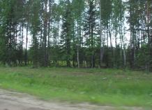 В лесополосе на территории Тамбовского района найден труп лошади
