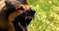 На Тамбовщине участились случаи заражения бешенством домашних животных