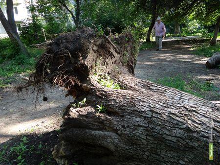 ВТамбове до сих пор не могут справиться с последствиями первомайского урагана