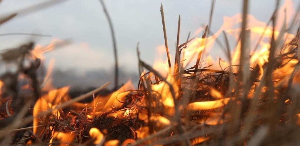 За сжигание сухой травы и мусора оштрафовали 10 тамбовчан