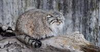 В зоопарке ТГУ появится животное из Красной книги