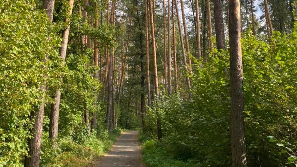 Тамбовскую область признали самым экологически чистым регионом страны