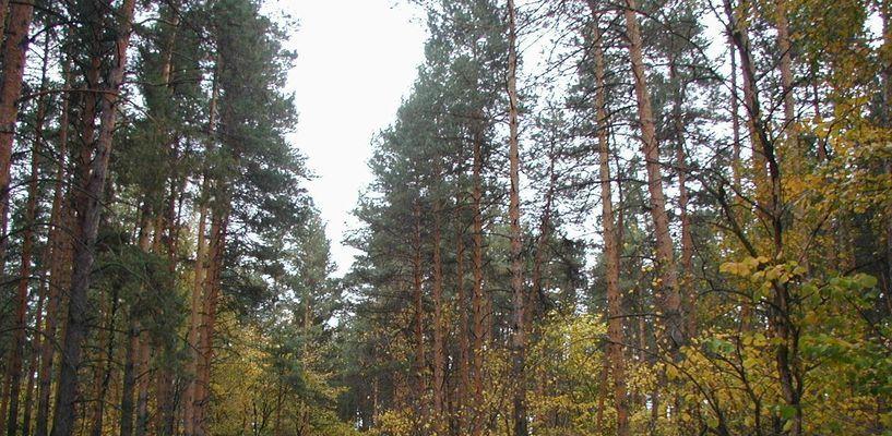 В лесах Тамбовщины в 2017 году ликвидировали 4 возгорания
