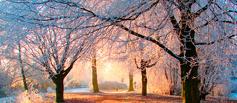 Блогосфера ВТамбове: Совсем по-зимнему