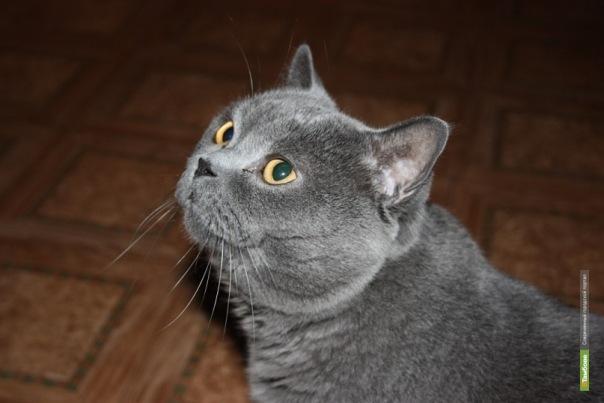 Булгакоманы наградят лучшего тамбовского кота