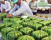 Эксперты просят временно запретить ГМО в России