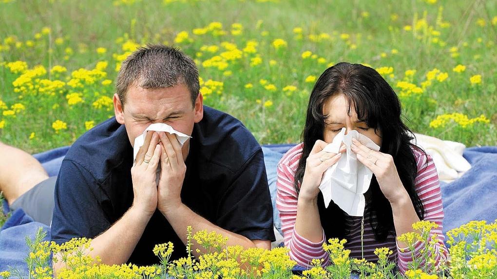 Пыльца надвигается! Когда тамбовчанам нужно готовиться к сезонному всплеску аллергии?