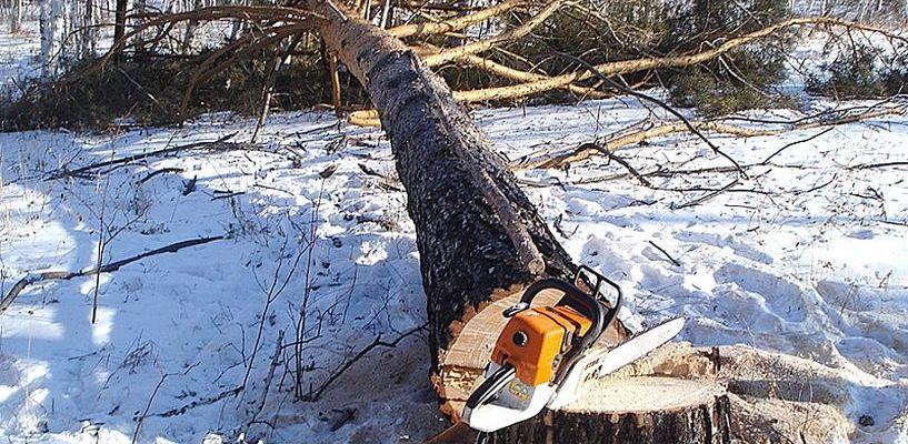 В Тамбовском Лесхозе в результате несчастного случая погиб лесоруб