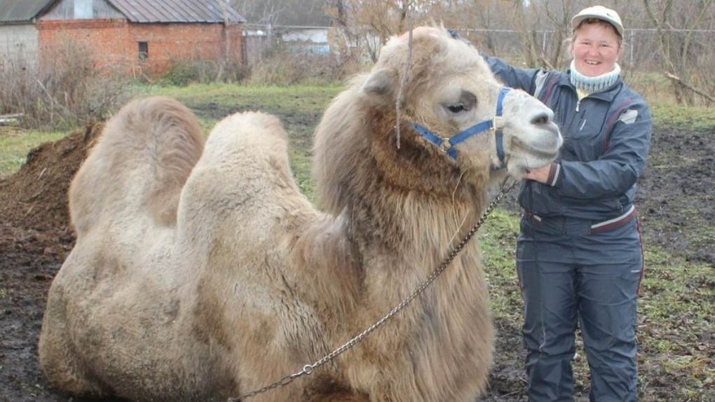 Зоопарк какой-то: во дворе у жительницы Рассказово живут лошади, пони, ослы и верблюд