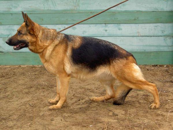 В Рассказово служебная собака нашла похитителя зерна