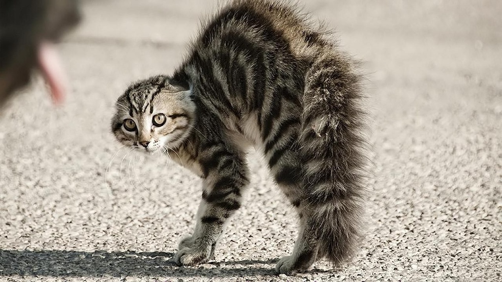 В Тамбове в одном из домов нашли бешеного котенка