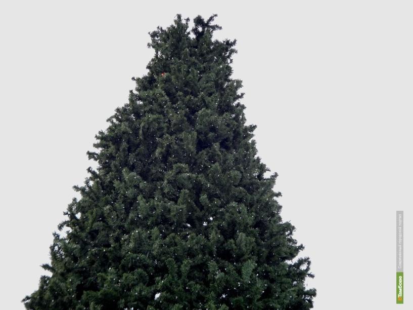 В Тамбове преображают новогодние елки на центральных улицах