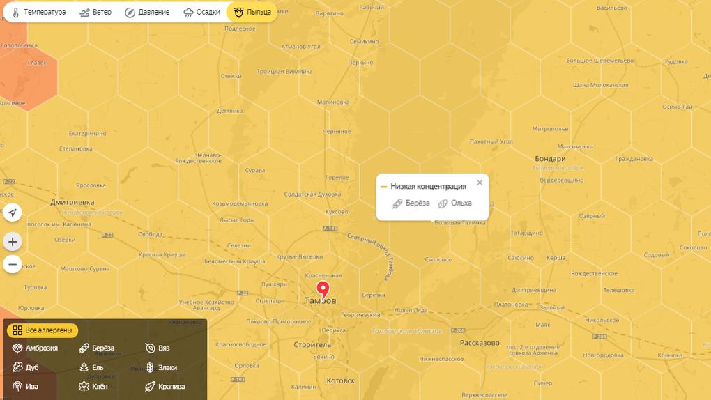 Для аллергиков: на Яндекс.Погоде появилась карта пыльцы в Тамбовской области