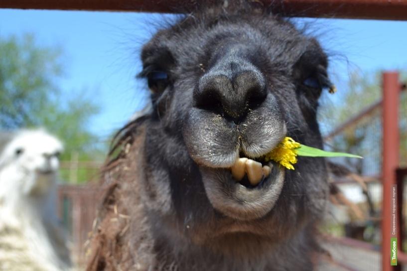 Питомцы тамбовского зоопарка очнулись от зимней спячки: фоторепортаж