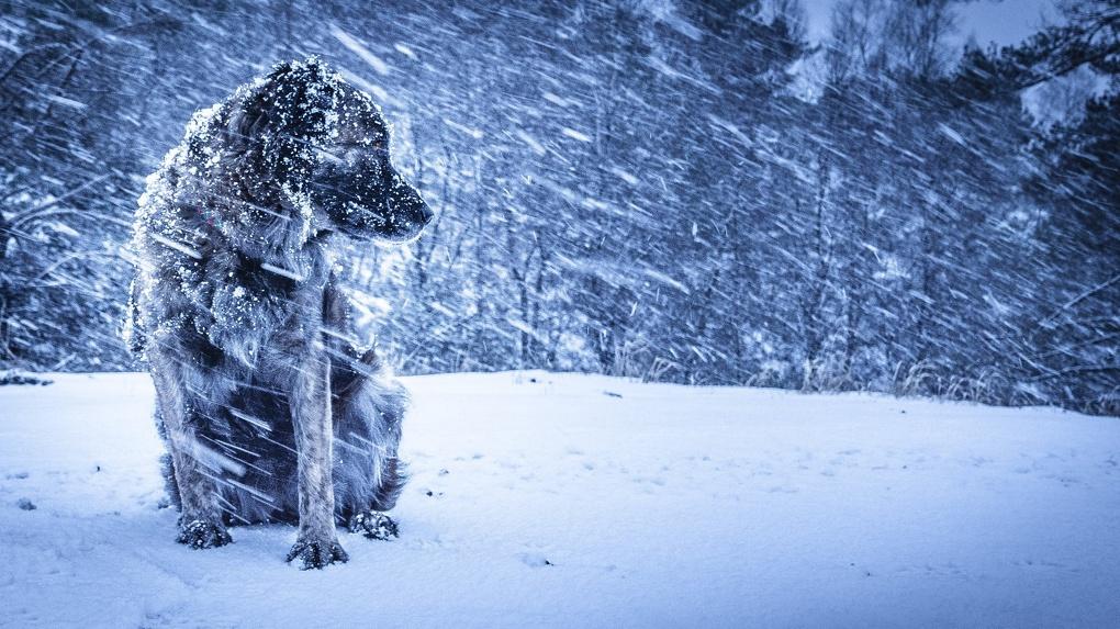 Метель, снег, гололёд и ветер: ещё одно экстренное предупреждение для тамбовчан