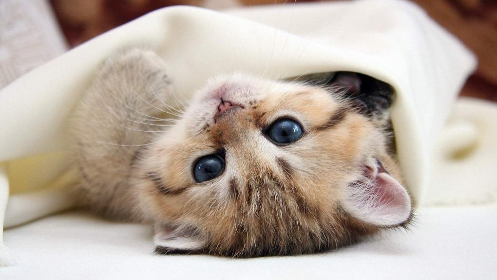Продажи котов в РФ увеличились после обвала курса рубля