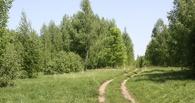 Правительство высоко оценило работу по сохранению лесов на Тамбовщине