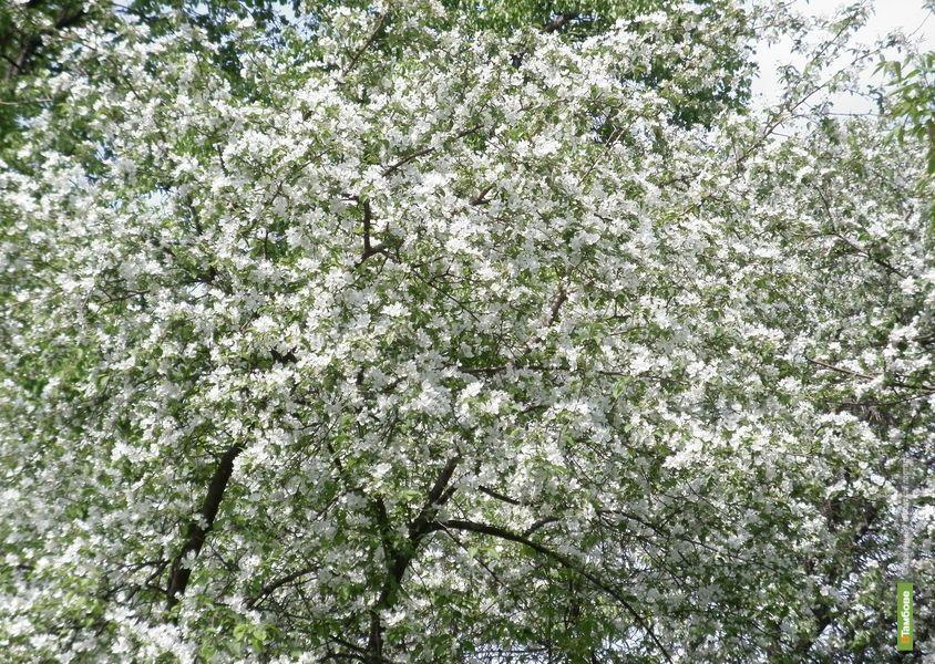 10 заповедей мая, или как провести время с пользой