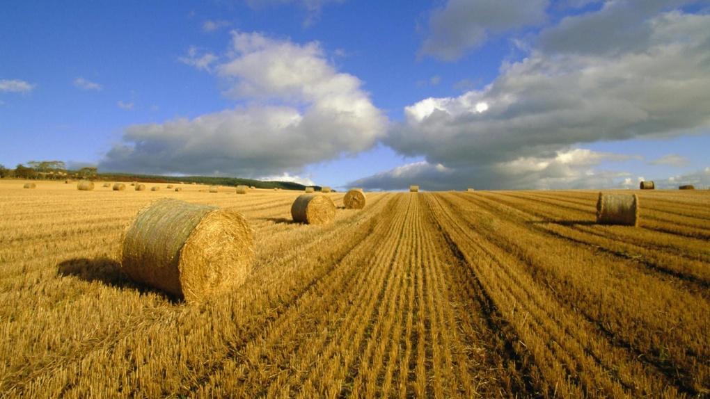Гранты для тамбовских аграриев выросли в разы