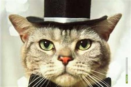 У рижской думы появится официальный кот