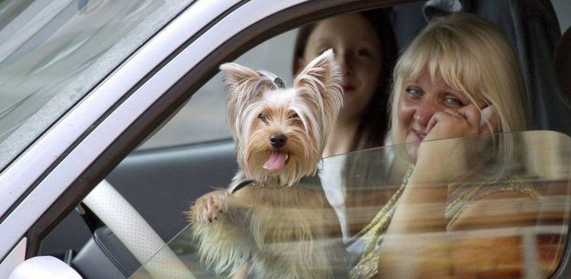 Кто водит лучше? Мужчины чаще звонят на горячую линию помощи водителям