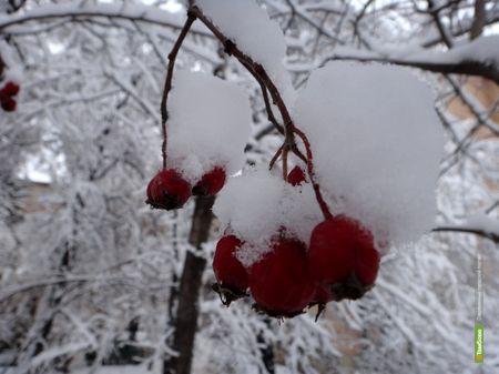 На 8 марта в Тамбов вернутся морозы