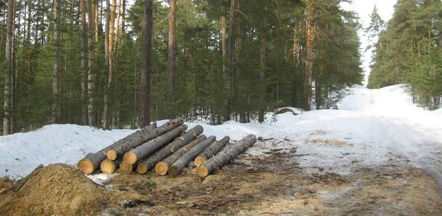 За незаконную рубку леса двое мужчин получили условные сроки и крупный штраф