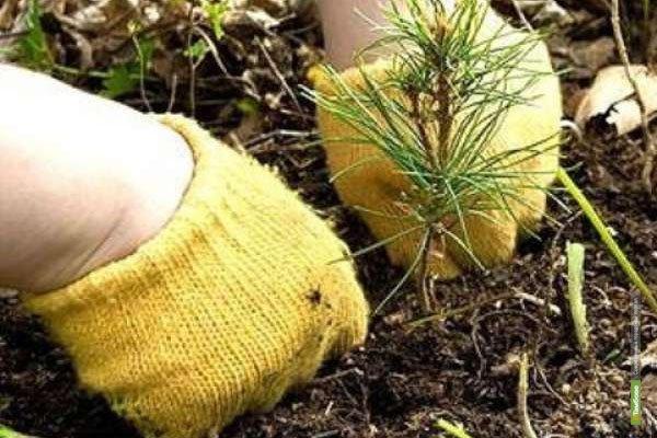 Тамбовские лесники отметили Единый день Всероссийской посадки деревьев