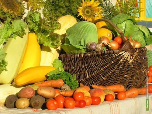 На Тамбовщине выросли объёмы реализации сельхозпродукции
