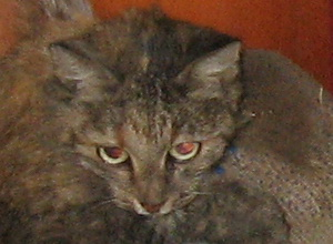"""В Тамбове кошка 3 дня провисела """"между жизнью и смертью"""""""