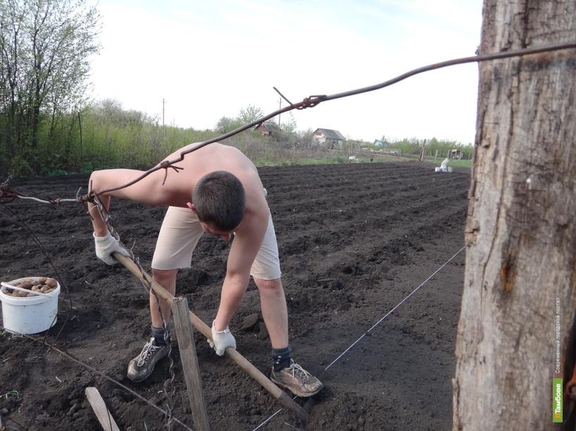 Зарплата тамбовских сельхозработников не дотягивает до минималки