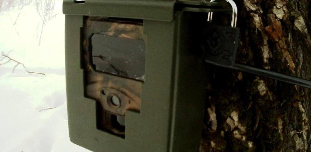 В Воронинском заповеднике в объектив фотоловушки попали лось и лиса