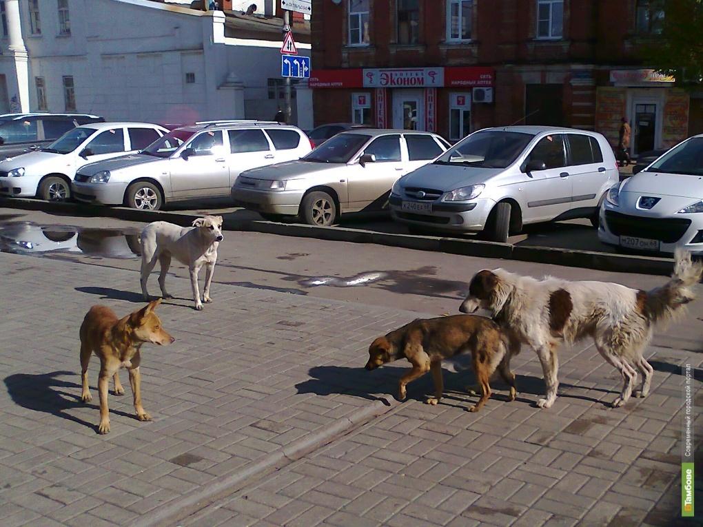 В зоопарке ТГУ будут жить бездомные собаки