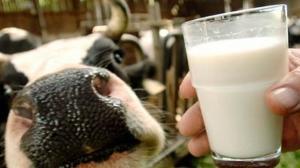 На Тамбовщине в молочное производство инвестируют 300 миллионов рублей