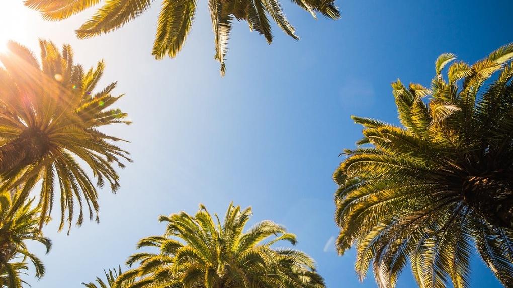 С видом на море: в скверах Тамбова появятся пальмы