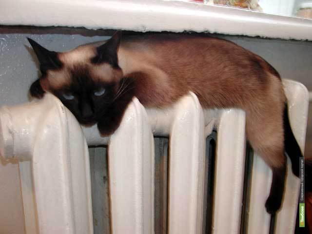 Отопление в домах тамбовчан отключат к 19 апреля