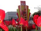 Улицы Тамбова преобразились ко Дню Победы