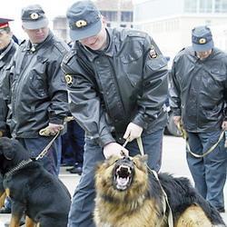 Праздничные гулянья ВТамбове пройдут под присмотром полиции
