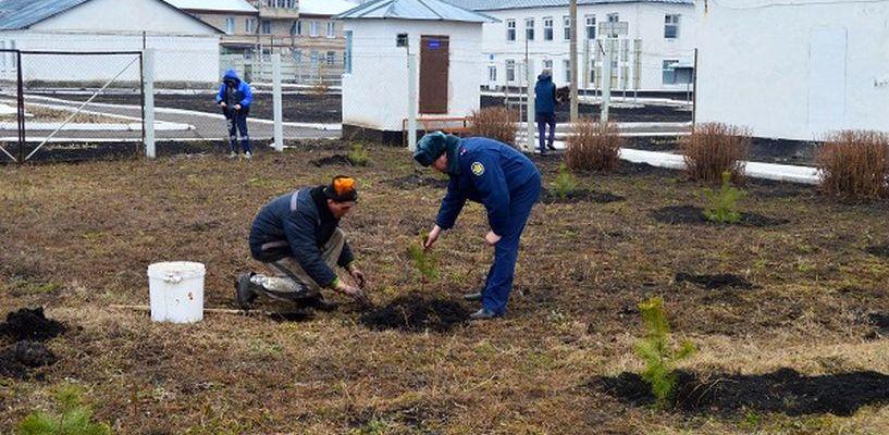 Заключённые разбили парк с фонтаном на территории Кирсановской колонии