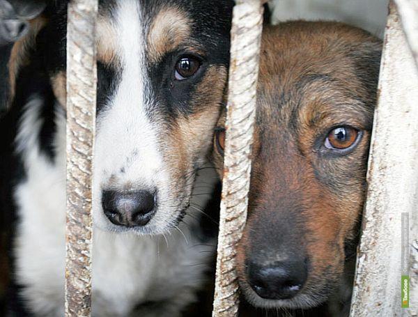 Бродячих собак в Тамбове обеспечат жильем
