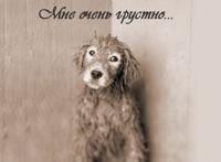 В Киеве задержан живодер, который убил более 100 собак