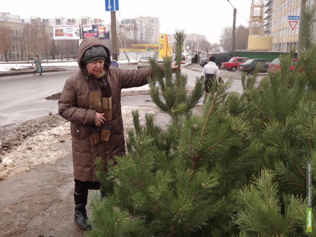 В Тамбове началась распродажа елок