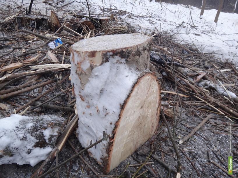В Притамбовье поймали с поличным похитителей леса