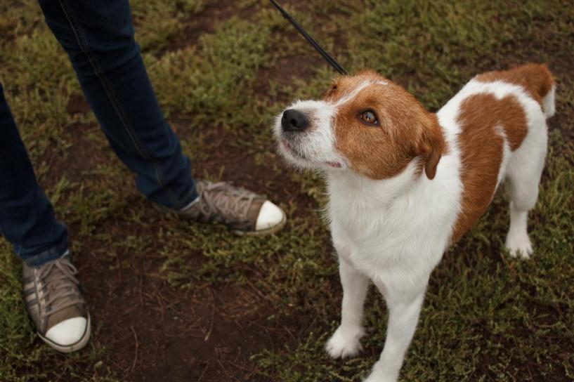 В Бондарском районе пройдут соревнования охотничьих собак