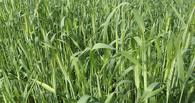 На растениеводство области потратят полмиллиарда рублей