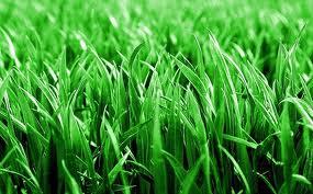 На Интернациональной раскатают рулонный газон